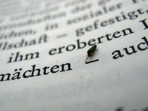 insekt_auf_text.ikl959.com