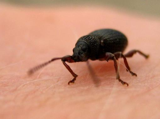 bug_makro-ikl959