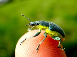 bug_super-Makro_ikl959.com